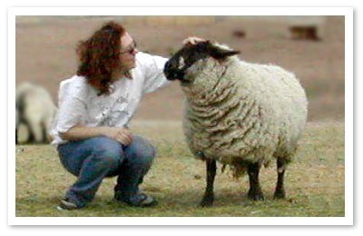 Marcie, the rescued sheep, eventually learned to trust humans again. Photo © Peaceful Prairie Sanctuary.