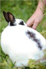 This is Mischief, the bunny love of my life! Photo: Tessa-B.com