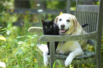 Aren't these this lab and cat just adorable! Best of friends and our best friends. But are we friends to them? Photo © iStock vectorarts.