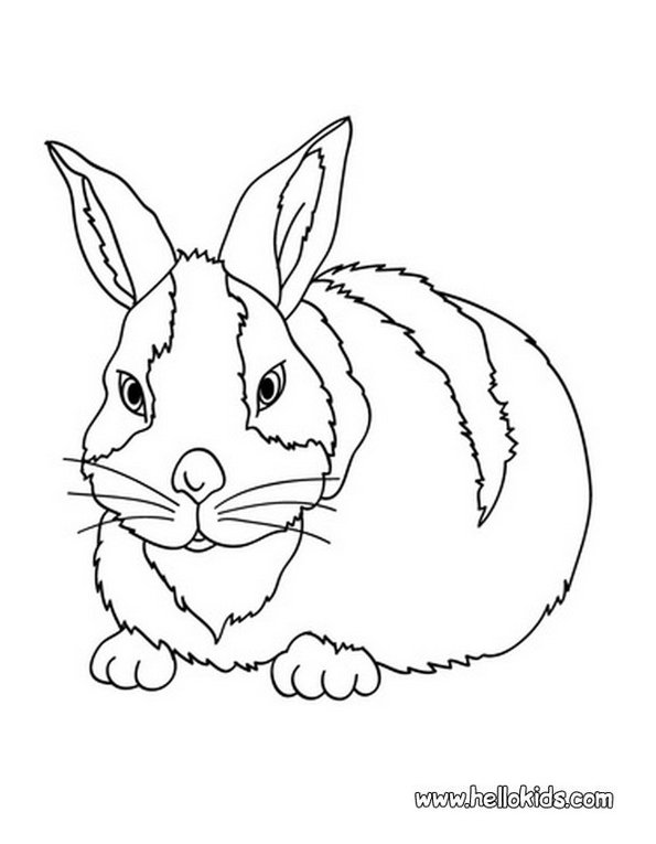 Print bunny colouring in picture. Photo © www.hellokids.com