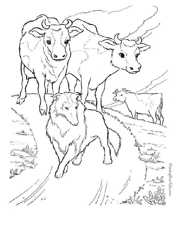 Print picture of cows and collie to colour in. Photo © RaisingOurKids.com