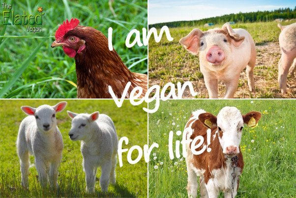 Do you love animals? Commit to being vegan for life!