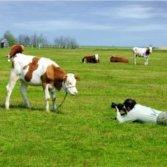 photographer and calf 6857216_s 123RF Goce Risteskix250 square
