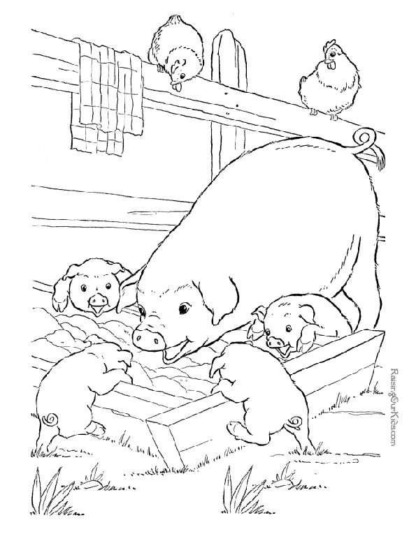 Print picture of pig and piglets to colour in. Photo © RaisingOurKids.com