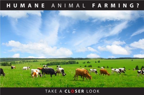 Click on this image to read Peaceful Prairie Sanctuary's pamphlet on humane animal farming.