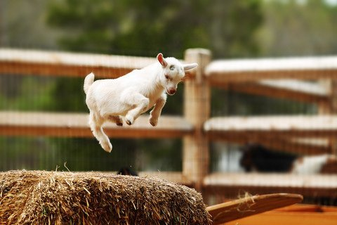 white kid jumping on haybale dreamstime_xs_40622407 Jixue Yang